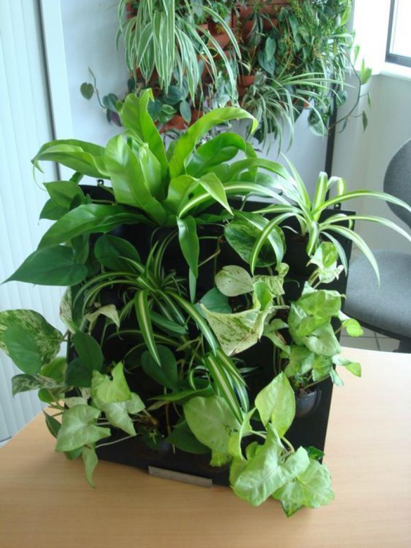 Plante au mur plante ornementale exterieur mixte herbe for Plante verte pour salon