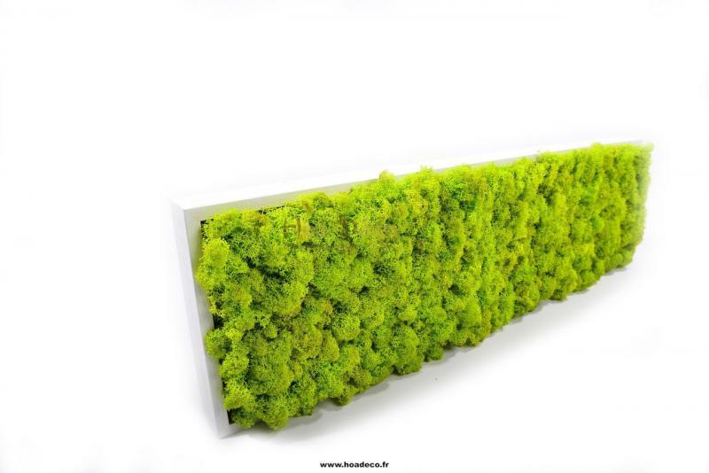 tableau de lichen stabilis vert citron slim 60x18. Black Bedroom Furniture Sets. Home Design Ideas