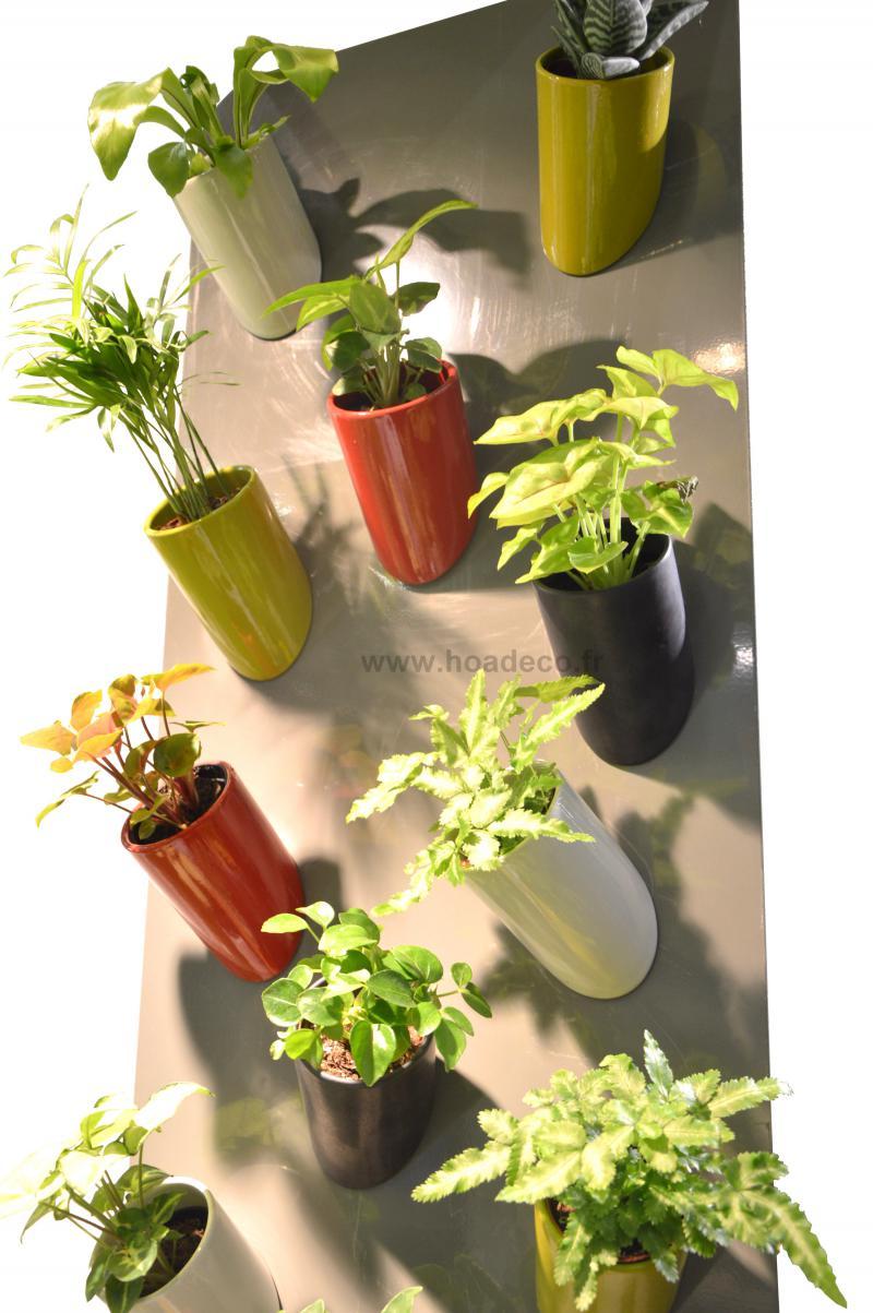 canon magnet aimant avec 1 plante. Black Bedroom Furniture Sets. Home Design Ideas