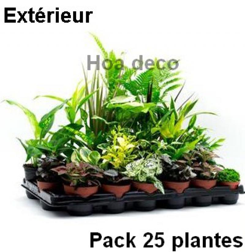 lot de 25 plantes 9cm pour mur v g tal ext rieur. Black Bedroom Furniture Sets. Home Design Ideas