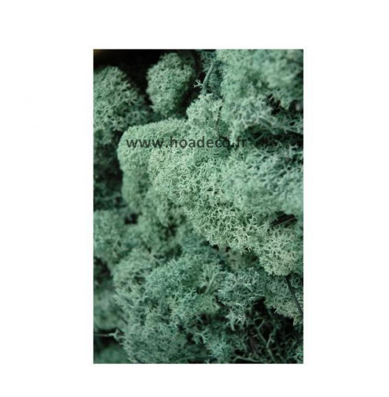 tableau de lichen stabilis pacific 60 x 60 cm. Black Bedroom Furniture Sets. Home Design Ideas