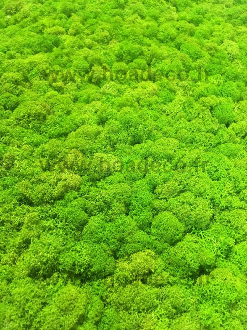 0 5 3 kg lichen scandinave vert citron stabilis for Plantes artificielles rennes