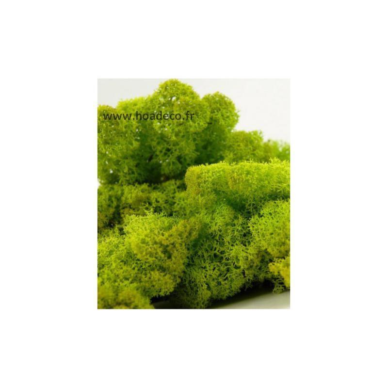 tableau de lichen stabilis vert nature 60 x 60 cm. Black Bedroom Furniture Sets. Home Design Ideas