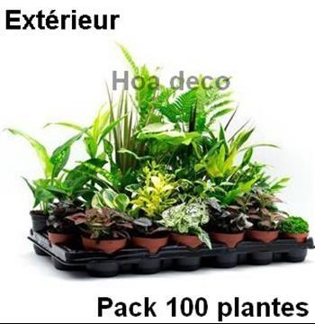 Gramin es vari es en pot - Plante pour mur vegetal exterieur ...