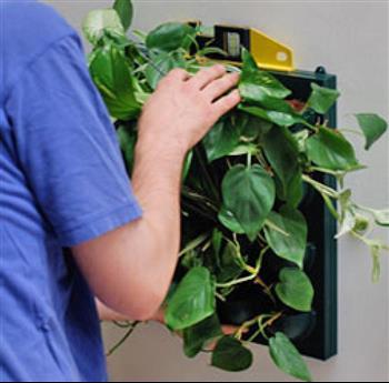 Conseils et informations sur les murs v g taux et plantes for Conseil sur les plantes