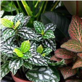 Lot de 10 plantes pot 6cm pour mur v g tal int rieur for Mur vegetal fausse plante